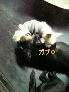 f0148927_1903879.jpg