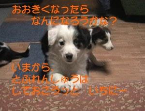e0113228_20374825.jpg