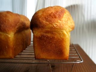 ホシノでかぼちゃミニ食パンと丸パン_c0110869_16514236.jpg
