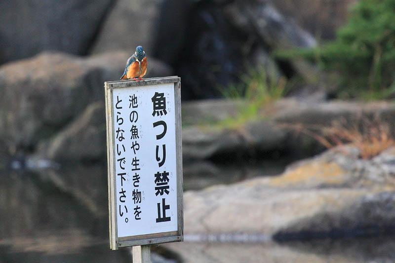 カワちゃんには判読出来ません_b0024798_4371695.jpg