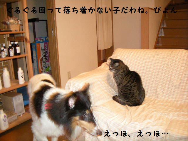 f0081100_12585081.jpg
