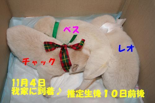 f0121712_1614385.jpg