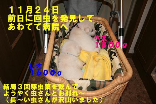 f0121712_1623446.jpg