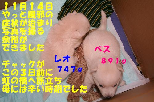 f0121712_162498.jpg