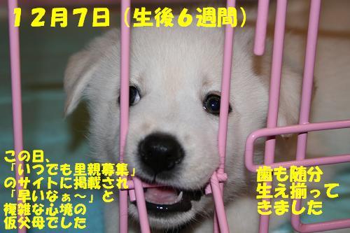 f0121712_1641329.jpg