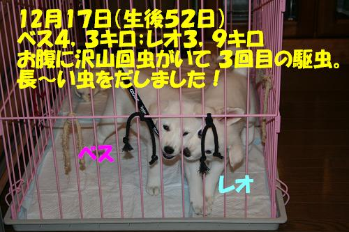 f0121712_164207.jpg