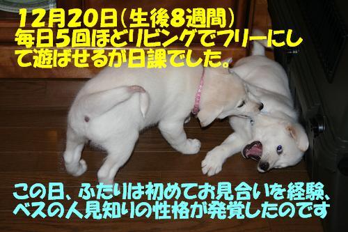 f0121712_1642792.jpg