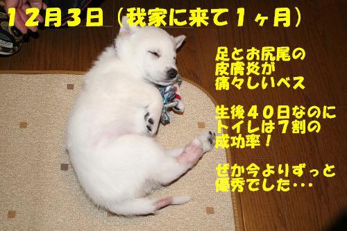 f0121712_164645.jpg