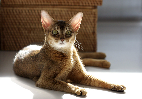 [猫的]パラボラアンテナ_e0090124_8153425.jpg