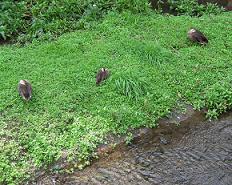 日比谷公園にお住まいの方々_f0139963_631258.jpg
