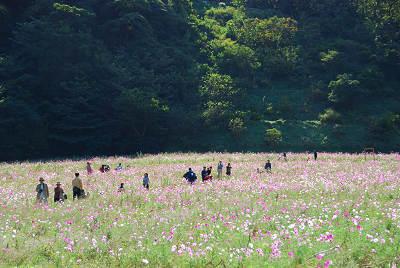 くりはま花の国公園~コスモス編_c0135079_20201761.jpg
