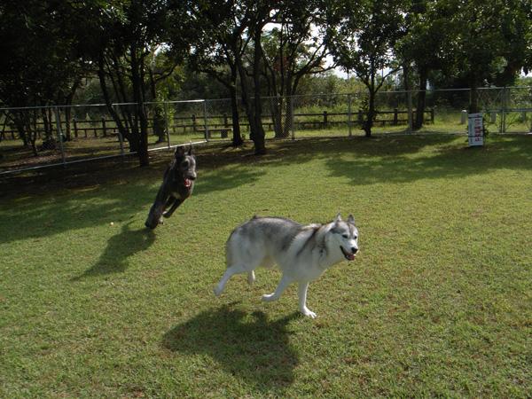 犬生はじめてのピンチ★_c0049299_16331260.jpg