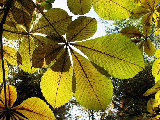 10月27日(土):緑から黄色へ_e0062415_16295438.jpg