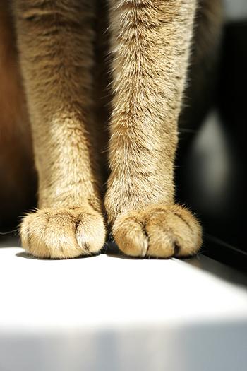 [猫的]ポーズ_e0090124_8253523.jpg