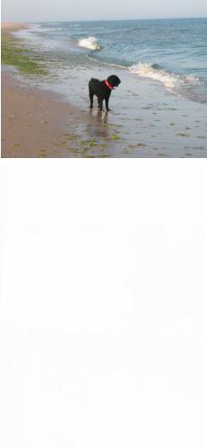 f0152733_10231547.jpg