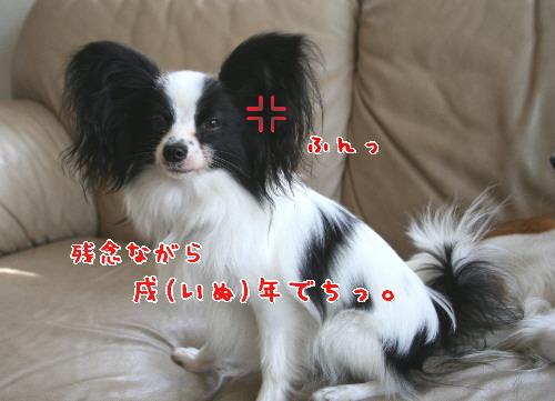 d0013149_1301010.jpg