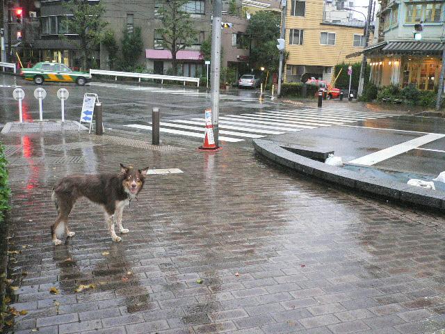 雨の日は計画的に、、、_b0051654_19264228.jpg