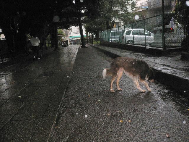 雨の日は計画的に、、、_b0051654_19272067.jpg