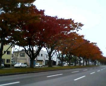 綺麗な紅葉_b0106766_1656253.jpg