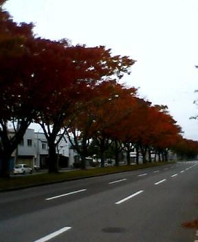 綺麗な紅葉_b0106766_16563660.jpg