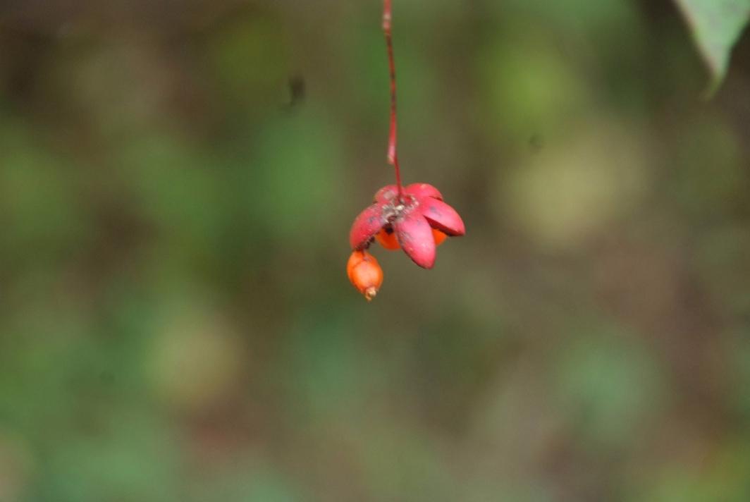 吊り花の実@信州_d0056382_23145412.jpg