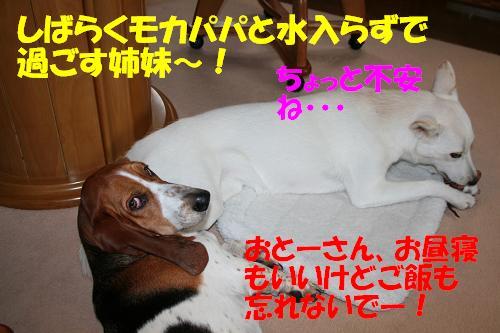 f0121712_7425871.jpg