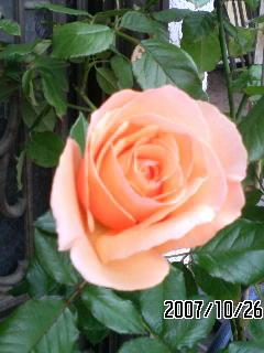 f0033314_16551759.jpg