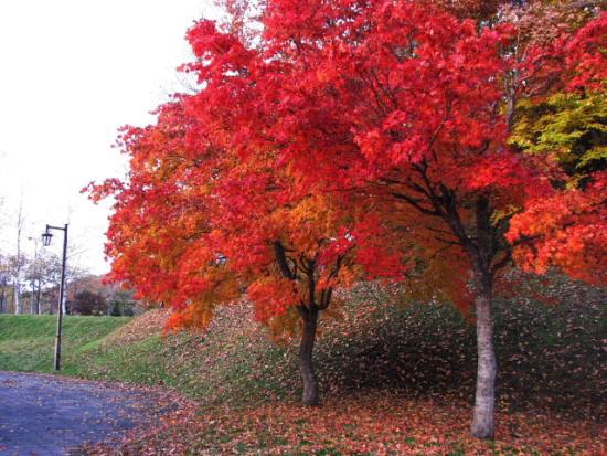 10月28日(日):紅葉も燃える_e0062415_19345626.jpg