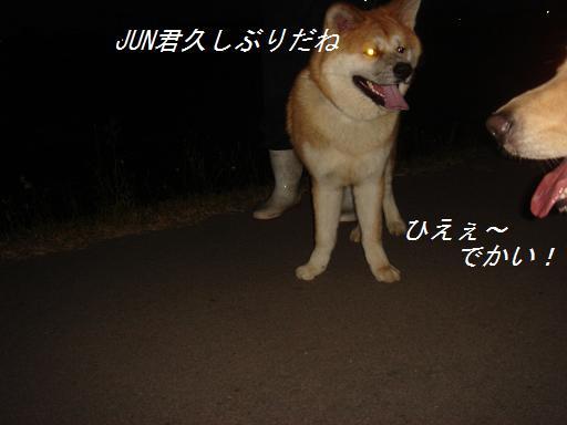f0114128_21465668.jpg