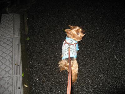 深夜の散歩!♪