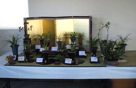 ◆東洋蘭春蘭の展示会、。           No.139_d0103457_23444829.jpg