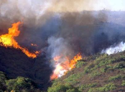南カリフォルニアの山火事・最終章 - fire ecology Part3 -_b0069365_14172068.jpg