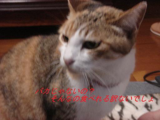 f0114128_2045624.jpg