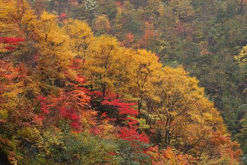 クマの棲む森へ 2_a0087133_2118582.jpg