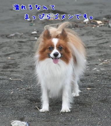 d0013149_1112298.jpg