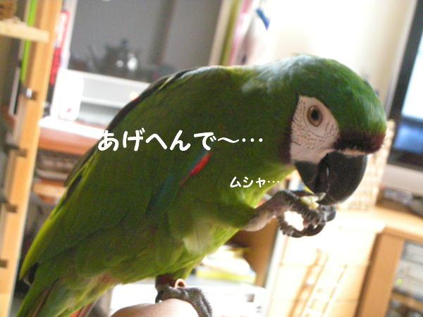 f0132055_2247655.jpg
