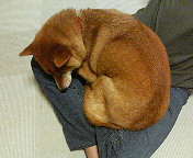 犬を洗った_b0011075_10234264.jpg