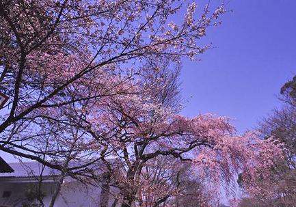 西国観音巡礼 <第11番 深雪山 上醍醐寺>_a0045381_21414254.jpg