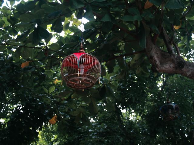 タイの風景 あれこれライレイ・ビーチ_f0024992_9245928.jpg