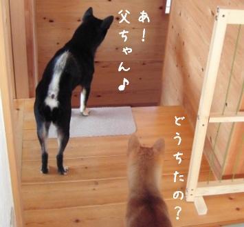 お出迎え_f0068501_10102574.jpg