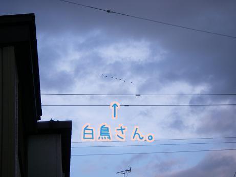d0122403_2012297.jpg