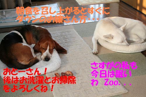 f0121712_8125415.jpg