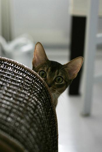 [猫的]コソコソ_e0090124_8204123.jpg