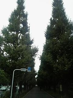 b0060042_20105176.jpg