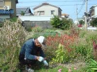 畑作業&スダチ絞り_c0108460_22201897.jpg
