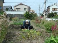 畑作業&スダチ絞り_c0108460_22221525.jpg