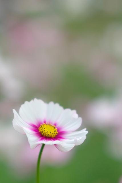 おとぎの国の花フェスタ_f0018464_2125316.jpg