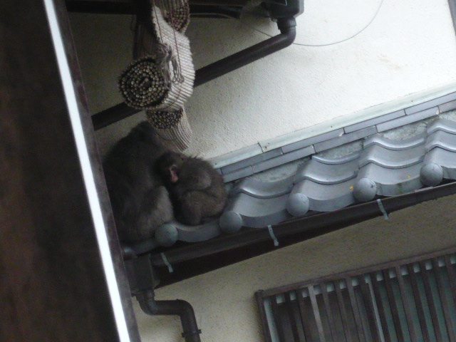 猿がきてます_c0100865_5524143.jpg