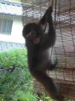 猿がきてます_c0100865_5531054.jpg