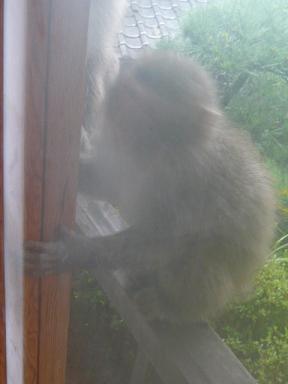 猿がきてます_c0100865_5532424.jpg